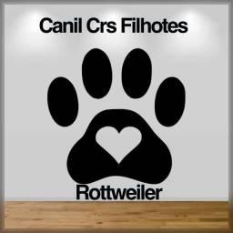Rottweiler cabeça de touro com pedigree e microchip até 18x