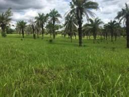 Vendo Fazenda de 48 Alqueires, 07 km de São Luis dos montes Belos-GO