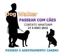 Adestramento Passeio com Cães Dog Walker Adestramento