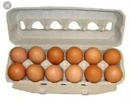 Ovos de galinha.