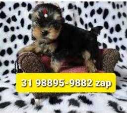 Título do anúncio: Filhotes Top Cães BH Yorkshire Maltês Basset Poodle Shihtzu Lhasa
