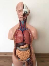 Torso Anatômico Anatomic