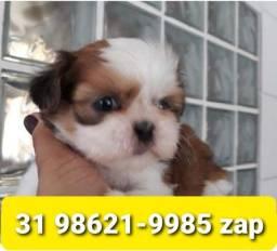 Título do anúncio: Canil em BH Filhotes Cães Shihtzu Maltês Lhasa Yorkshire Poodle Basset