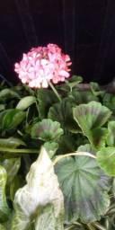 Flores e plantas ornamentais.