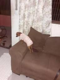 Vendo roupinha feita em crocher para seu pet