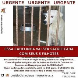 Urgente para ajudar