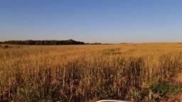 Título do anúncio: Fazenda de 600- hec c/ 400Aberto a venda em Primavera do Leste - MT