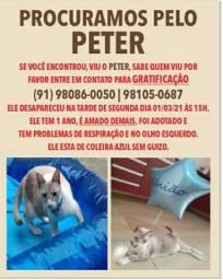 PROCURA-SE PELO PETER
