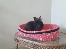 Vendo lindos mine coelhos 2 machos e uma fêmea