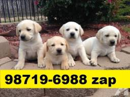 Canil Filhotes Cães Alto Padrão Pet BH Labrador Pastor Akita Rottweiler Golden