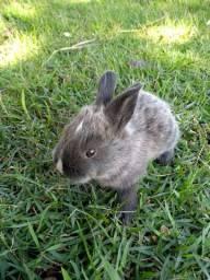 Filhotes de coelho a venda