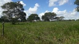 Fazenda com 150 hectares próximo a vera cruz estruturada em tudo!