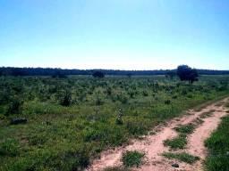 Arrendo p/ Soja. 1600 ha. Alto Araguaia-MT
