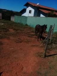 Vende-se cavalo top