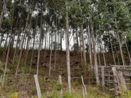 Chácara de 3 hectares com eucaliptos