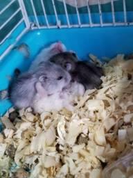 2 bebês de hamster