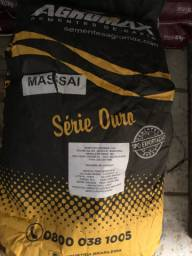 Promoção semente de massai blindada Agromax 10kg