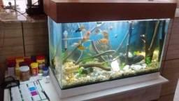 Manutenção/limpeza de aquários Marinhos e de água