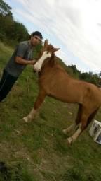 Vendo Cavalo gatiado