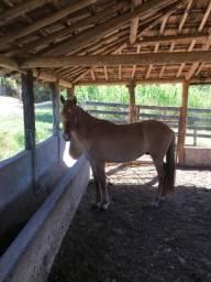 Cavalo MM