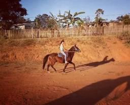 Cavalo manso de carroça bao de sela para lida