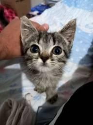 Doação 2 gatinhos