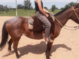 Cavalo rusilho