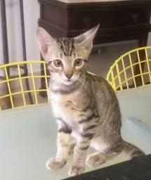 Gato para adoção com 3 meses