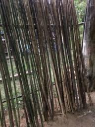 Bambu verde nao tratado de 1 a 5 cm