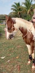 Título do anúncio: Vendo potra Paint Horse