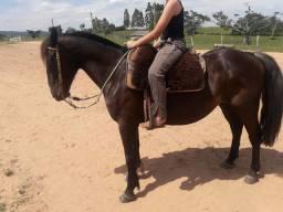 Cavalo zaino de toda confianca