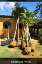Plantas Ornamentais frutíferas Palmeiras e arvores