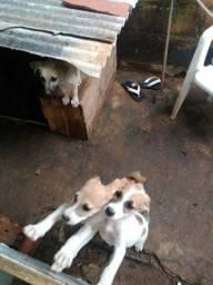 Doação filhote de cachorro fêmea