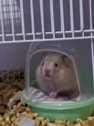 Vendo hamster + terrário
