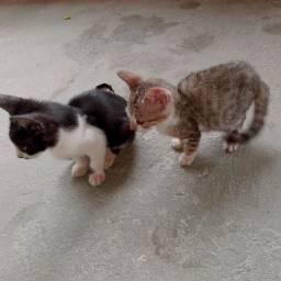 Doação de 2 filhotes de gato. Aproveitem.