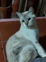 Adoção de uma gata 1 ano.