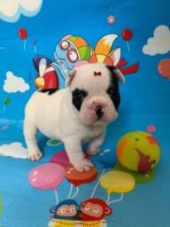 Título do anúncio: Bulldog francês ( Pedigree CBKC ) Fêmea