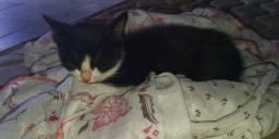 Filhote de gato - Doação