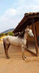 Cavalo castrado com papel