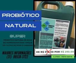 Probiótico Natural para Piscicultura e Carcinicultura - Bio Remediador de água.