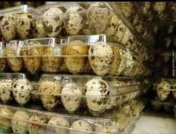 Ovos de codorna GIGANTES galados