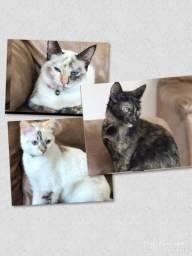Doação de 3 gatinhas