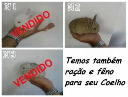 Coelho coelhos filhote filhotes 15,00 cada – Lindos