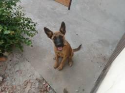 Lindo cão de guarda