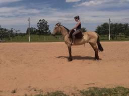 Cavalo baio cabus negro