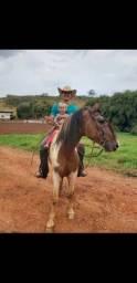 Cavalo Campolina Marchador Pampa