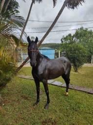Égua mangalarga marchador