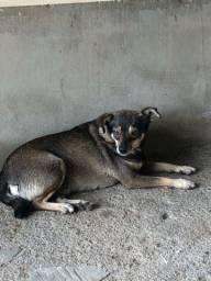 Cachorrinha para doação