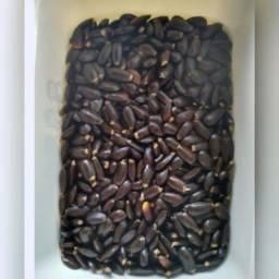 1000 sementes de Graviola da Gigante