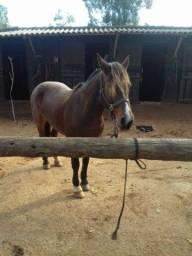 Égua rusilha